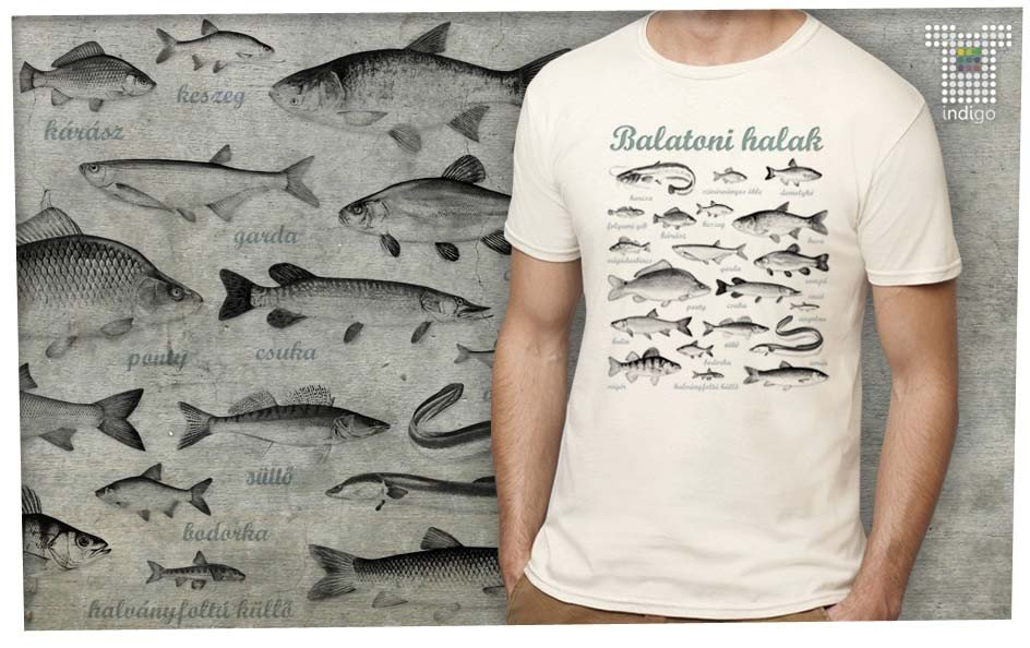 Fishes of the lake Balaton